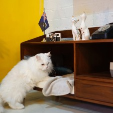 A TV Cabinet for Cats